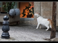 20101014-istanbul-kadikoy-modica-cat-interested-2